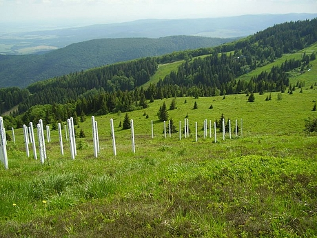 kojsova-hola-06