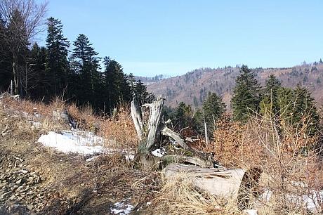 Cestou na Bukovy vrch