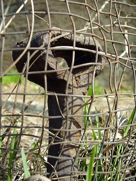 Kôl v plote