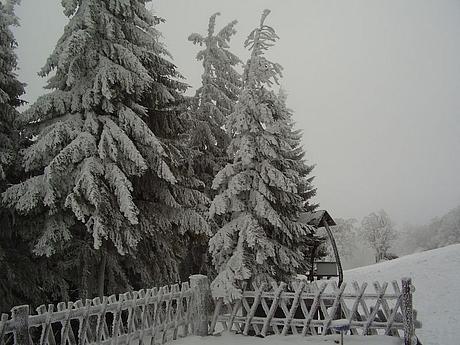 kojsova2007-1