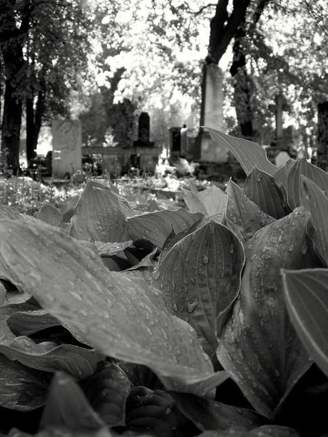 Martin, Slovenský národný cintoríne.
