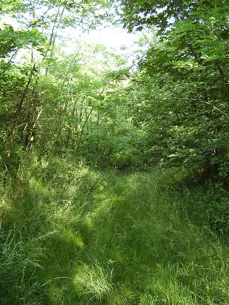 Milhost - Trichotare, agátové lesy