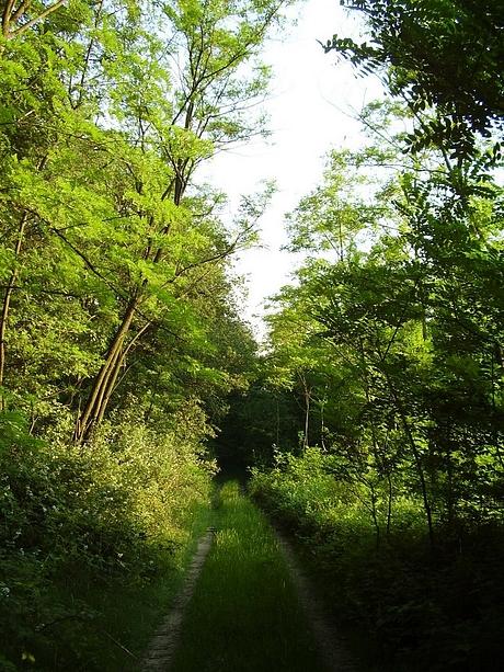 lesy na Maďarsko - Slovenskej hranici
