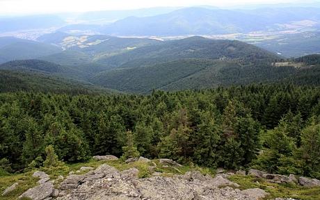 Skalisko (1239m), Volovské vrchy