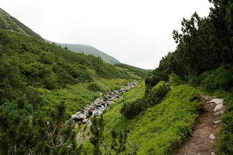 Bystrá dolina, už len v kosodrevine