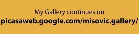 http://picasaweb.google.com/misovic.gallery/