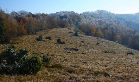 Chochuľka (modrá hrebeňovka), Čergovské vrchy