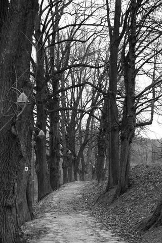 Stromová alej ku Kalvárii pod Urpínom