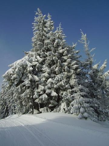 ... večný zimný motív ...