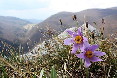 Jar na Zádielskej planine.