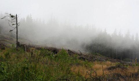 ,,, hmly nad Kojšovou hoľou ...
