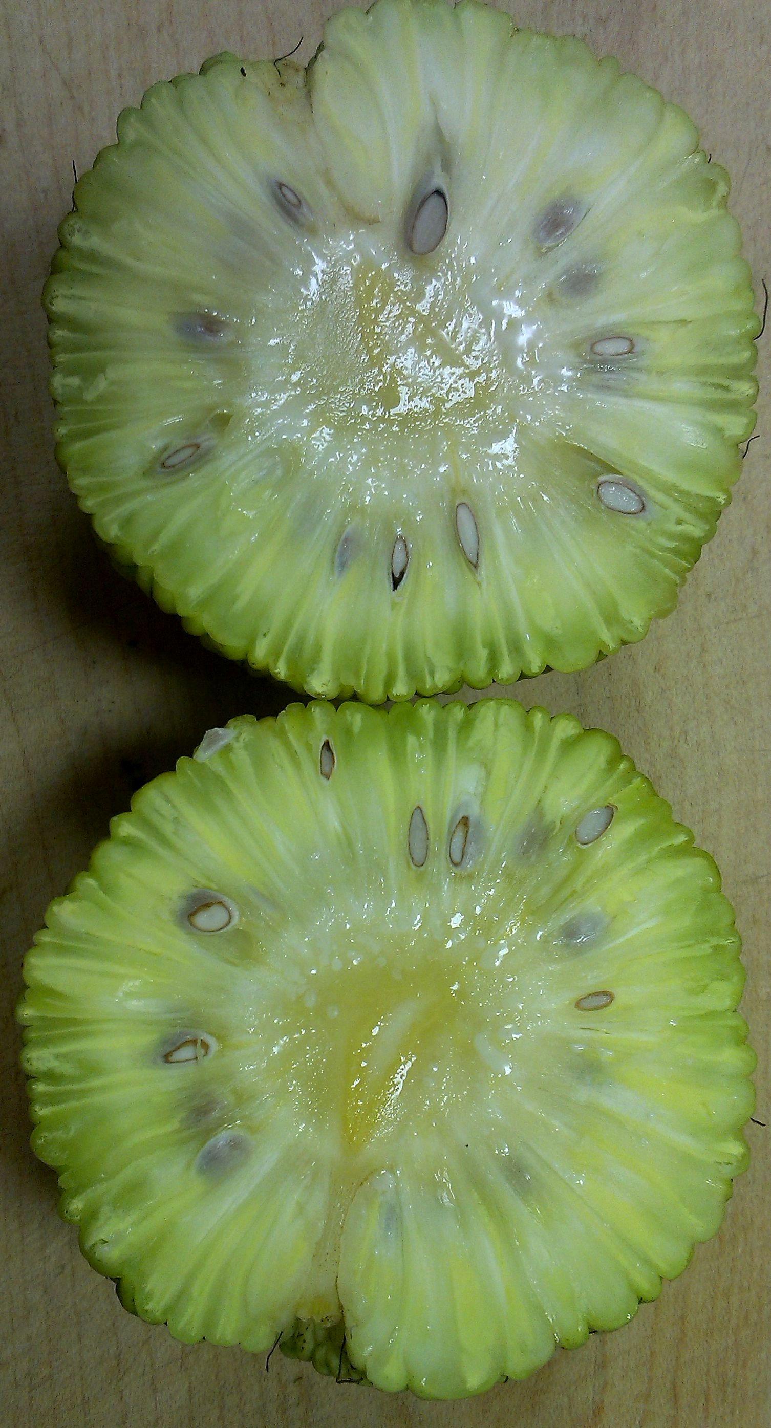Maclura pomifera (Maklura pomarančová)