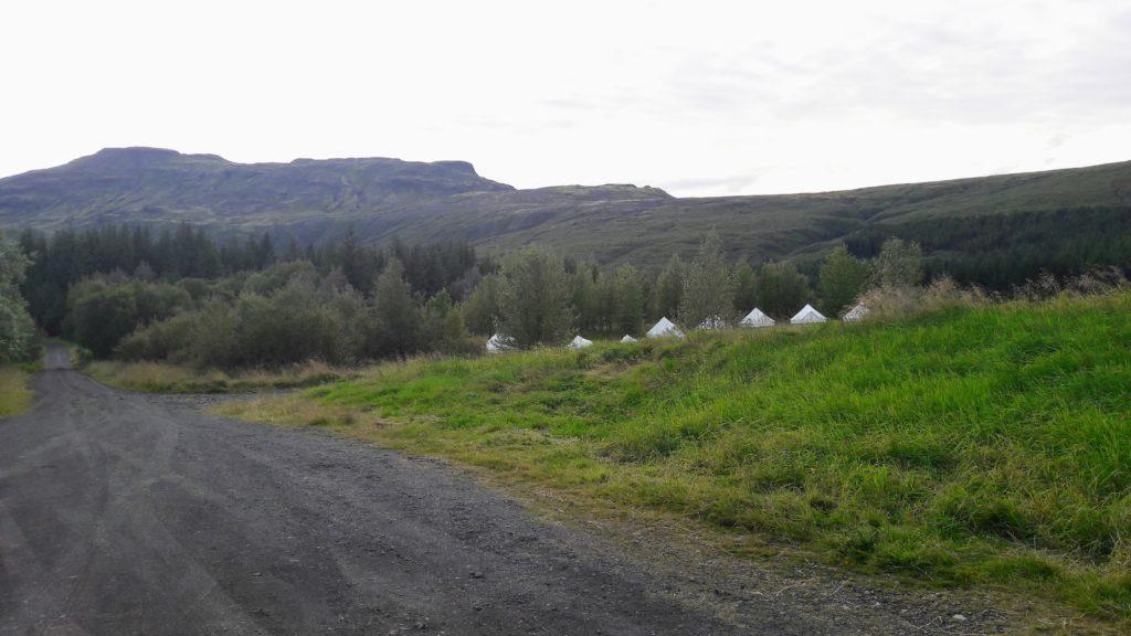 Haukadalsskógur, Island