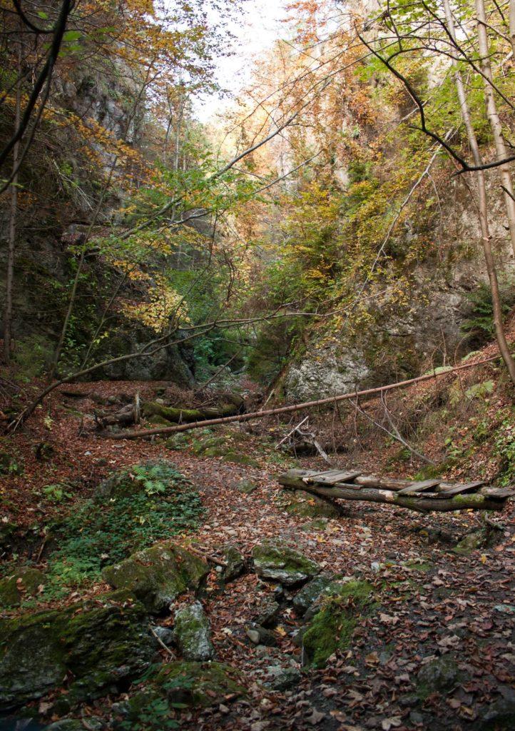 Lačnovská tiesňava, Branisko