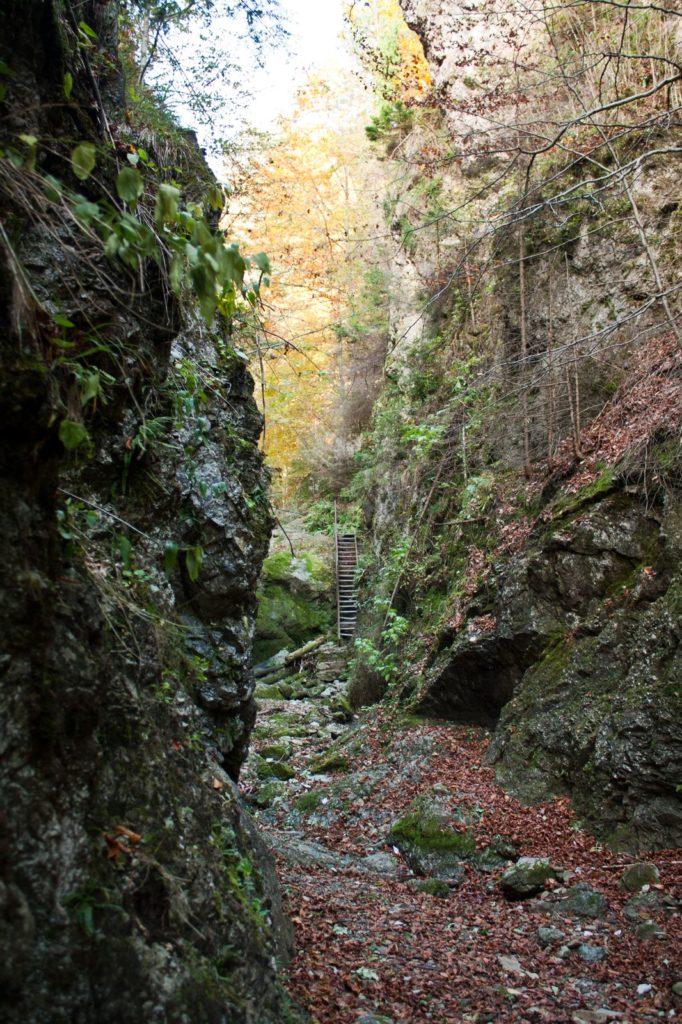 Lačnovská tiesňava (jediný rebrík), Branisko