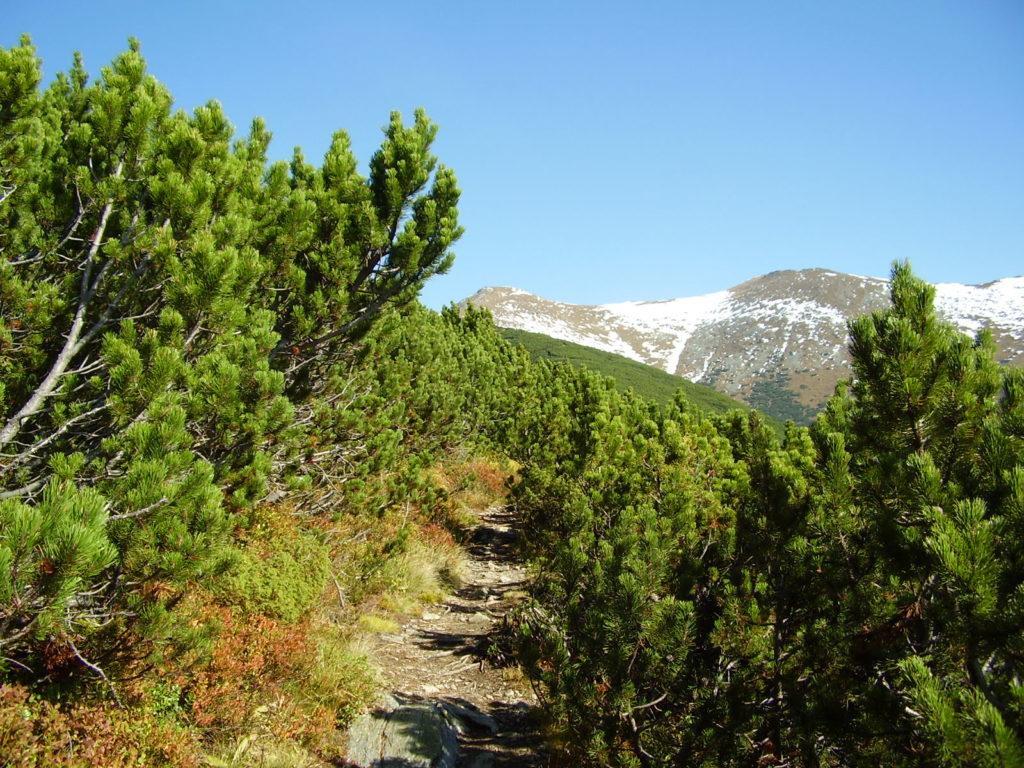 pod Holým vrchom, Západné Tatry