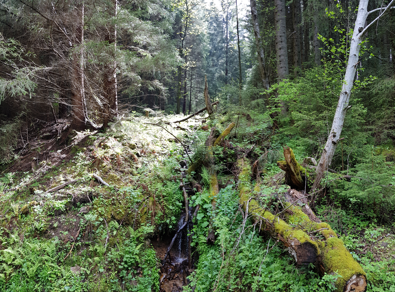 Pod Lazným vŕškom, Jánska dolina, Nízke Tatry